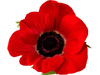 Read reviews and comments on Royal British Legion Hedon
